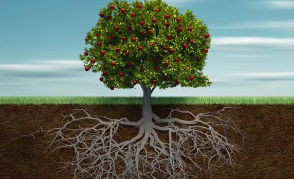 Корени и плодове